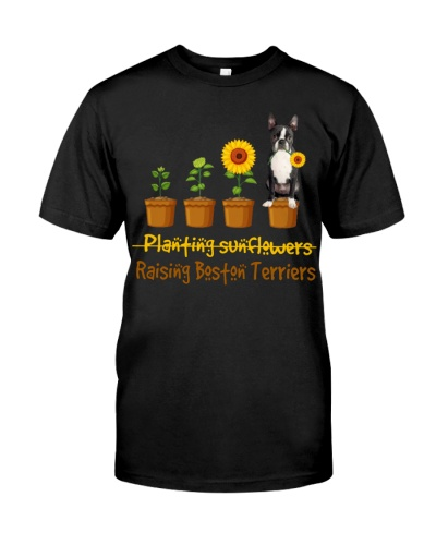 Boston Terrier Planting Sunflowers