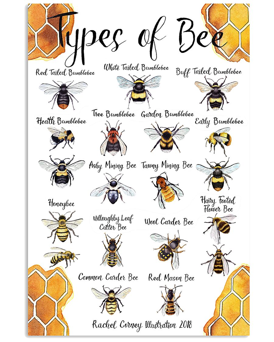 Poster types of bee 11x17 Poster