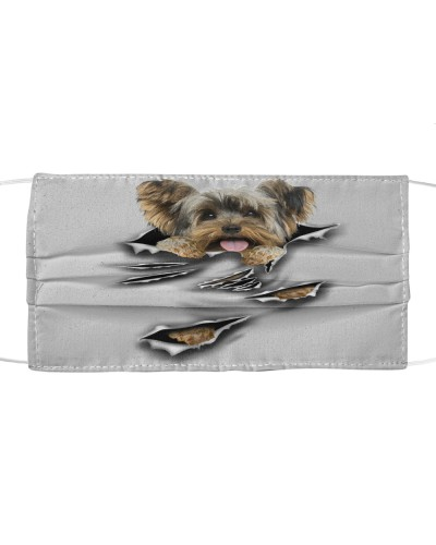 Yorkshire Terrier-Scratch1-FM