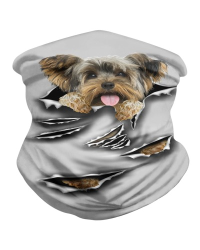 Yorkshire Terrier-Scratch1-BDN