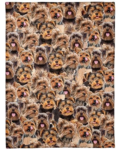 Yorkshire Terrier Full Face