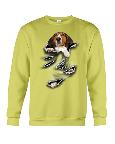 Treeing Walker Coonhound-Scratch