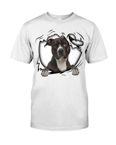 American Pit Bull Terrier Torn White