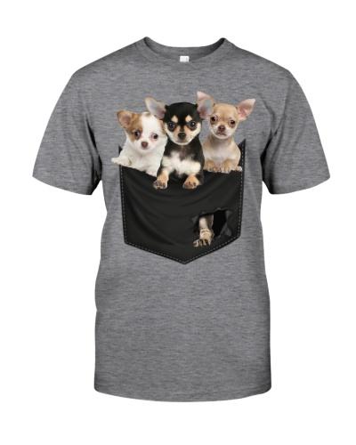 Chihuahuas-Pocket