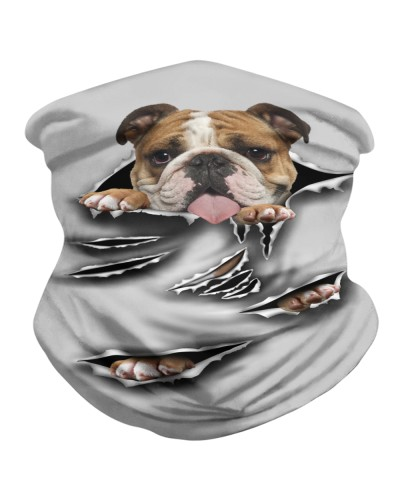 English Bulldog-Scratch1-BDN
