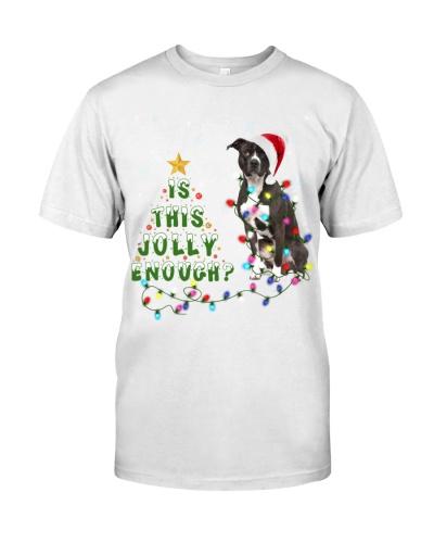 American Pit Bull Terrier-Jolly