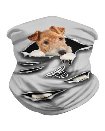 Wire Fox Terrier-Scratch1-BDN