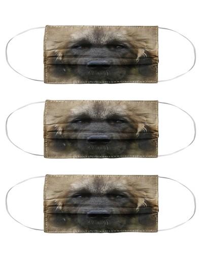 Leonberger Face