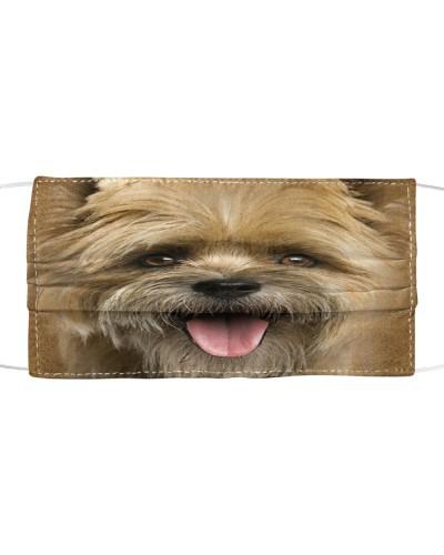 Cairn Terrier Lovely Face