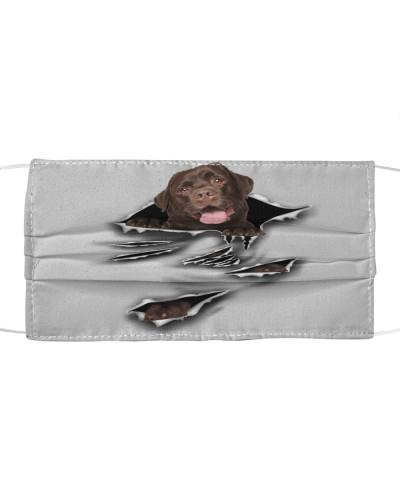 Chocolate Labrador-Scratch-FM