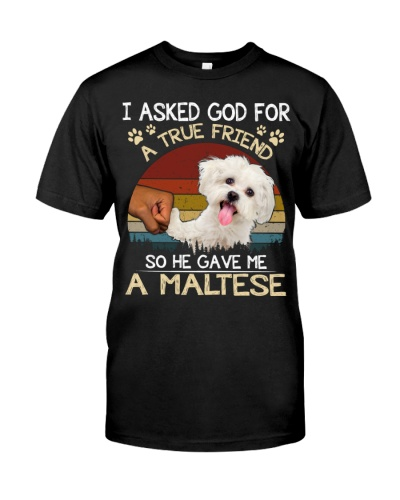 Maltese-A True Friend