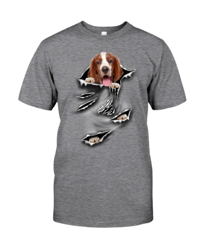 Welsh Springer Spaniel-Scratch