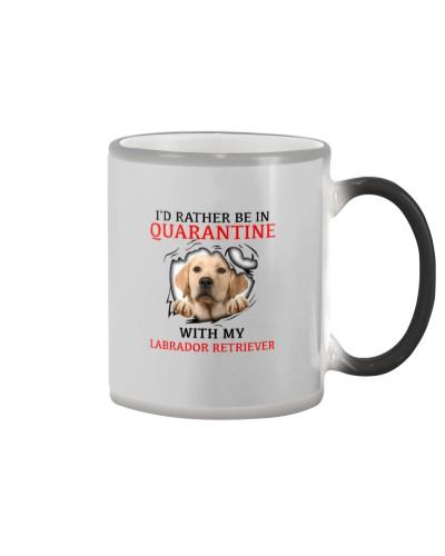 Quarantine With My Labrador Retriever