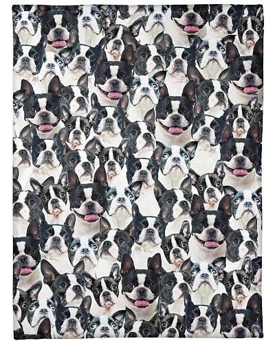 Boston Terrier Full Face