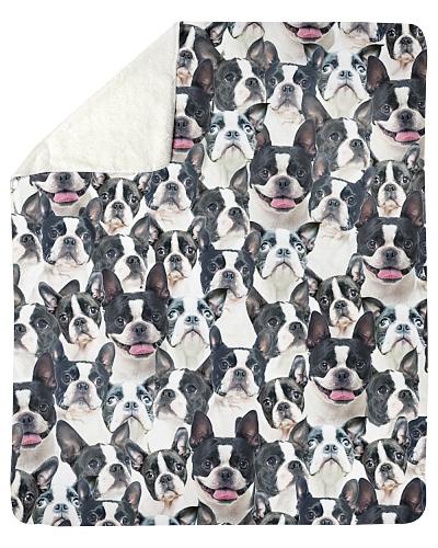 Boston Terrier Full Face