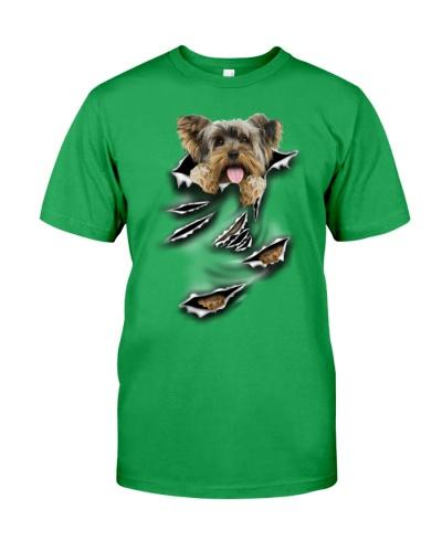 Yorkshire Terrier-Scratch
