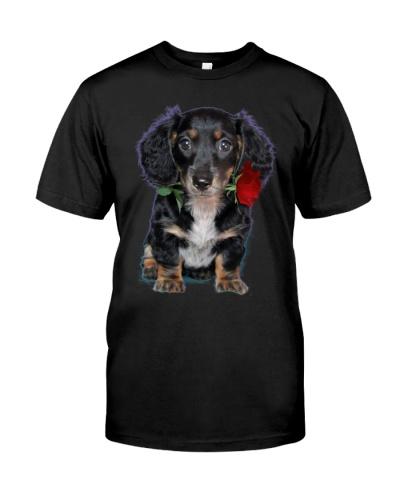 dachshund Longhair