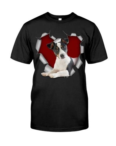 Jack Russell Terrier Torn Heart