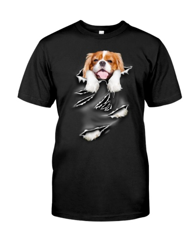 Cavalier King Charles Spaniel - Scratch