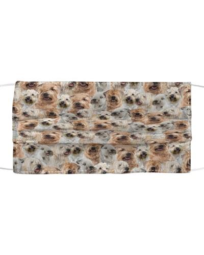 Soft-coated Wheaten Terrier FM Face