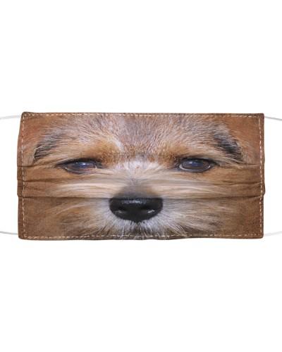Norfolk Terrier Lovely Face