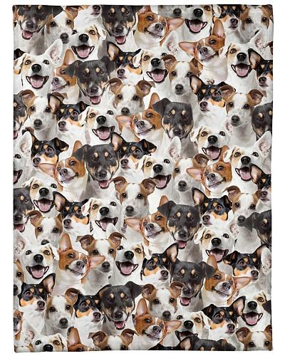 Jack Russell Terrier Full Face