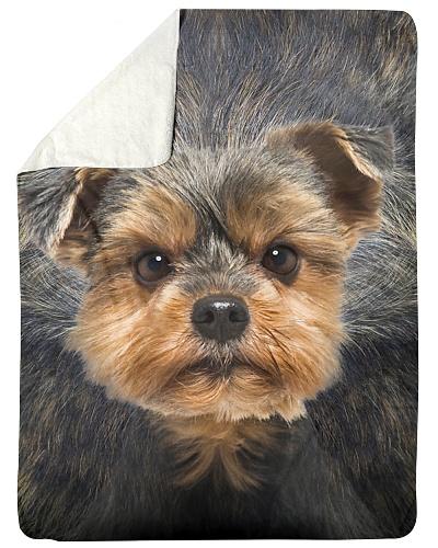Yorkshire Terrier Face 3D
