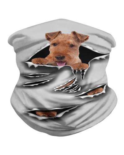 Welsh Terrier-Scratch1-BDN