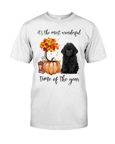 The Most Wonderful - Toy Poodle 2