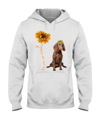 American Water Spaniel Sunshine