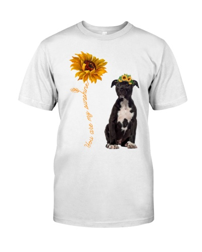 American Staffordshire Terrier Sunshine