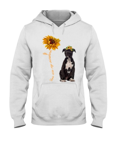 American Staffordshire Terrier Sunshine