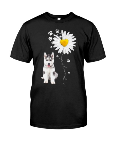 Sunshine - Husky