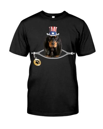 Zip - Black and Tan Coonhound