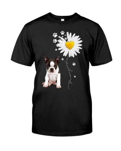 Sunshine - Boston Terrier
