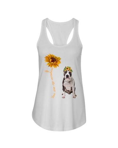 American Pit Bull Terrier Sunshine
