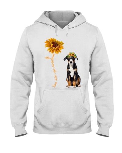 Appenzeller Sennenhund Sunshine