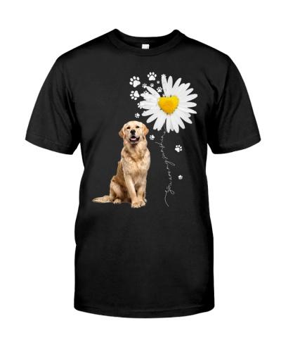 Sunshine - Golden Retriever
