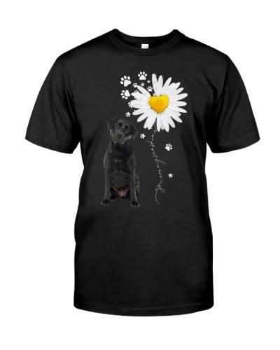 Sunshine - Black Labrador
