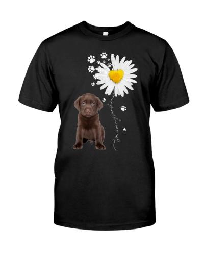 Sunshine - Chocolate Labrador Retriever