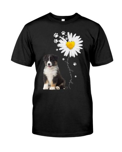 Sunshine - Australian Shepherd