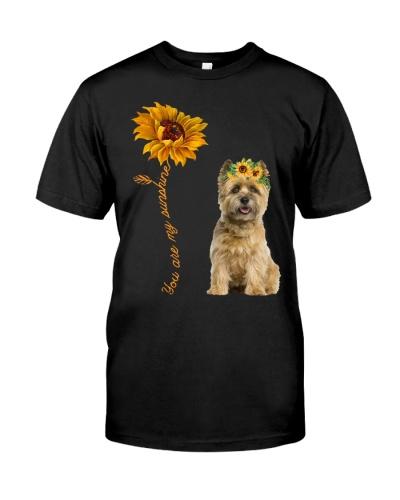 Cairn Terrier Sunshine