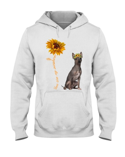 American Hairless Terrier Sunshine