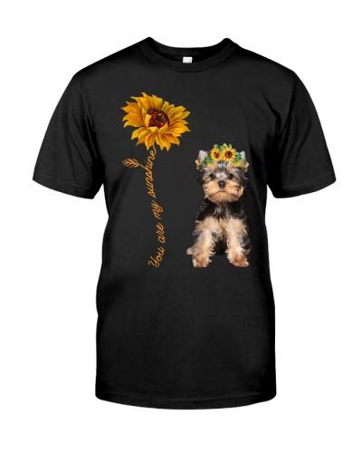 Yorkshire Terrier Sunshine