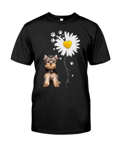 Sunshine - Yorkshire Terrier