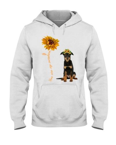 Australian Kelpie Sunshine