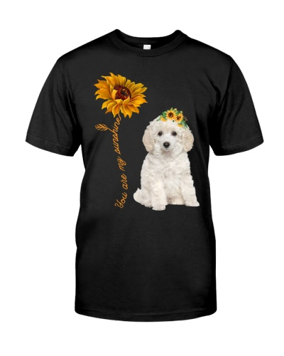 Toy Poodle  Sunshine