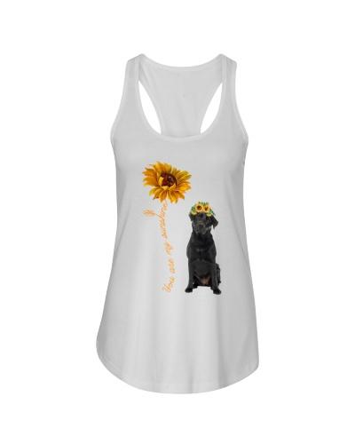 Black Labrador Dog Sunshine