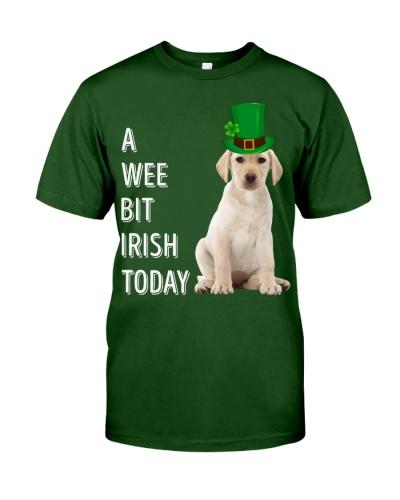 Yellow Labrador Irish Today