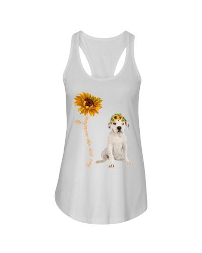 American Bulldog Sunshine